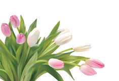 Tulips. Spring bunch of flowers, tulips Stock Photo