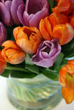Tulips. Purple and orange tulips isolated on white Royalty Free Stock Images