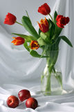 Tulips. Red tulips with tree nectarines Royalty Free Stock Image