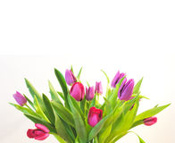 Tulips. Bunch of tulips Royalty Free Stock Images