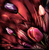 Tulips abstrackt. Bouquet art vision Royalty Free Stock Photo