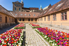 Tulips in Akershus Fortress Stock Photography