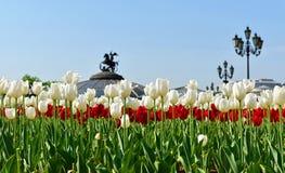 Tulips in Alexander Garden (focus on flowers) Stock Photography