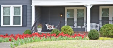 Tulips Along A Home's Walkway Stock Photography