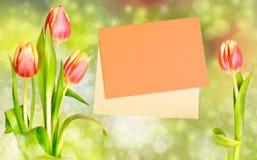 Tulips alongside an orange envelope on white background Royalty Free Stock Photos