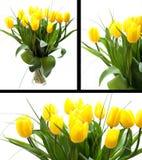Tulips amarelos Fotografia de Stock Royalty Free
