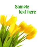 Tulips amarelos da mola Fotografia de Stock