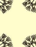 Tulips amarelos do frame de madeira Fotografia de Stock