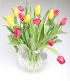 Tulips amarelos e vermelhos Fotografia de Stock Royalty Free