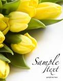 Tulips amarelos frescos fotografia de stock