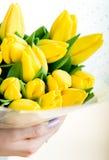 Tulips amarelos nas mãos da mulher Fotografia de Stock Royalty Free
