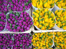 Tulips in Amsterdam. Two differnt colours of tulips available at the markets in Amsterdam Royalty Free Stock Photography