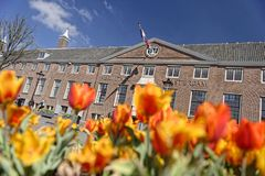 Tulips at Amsterdam Museum, Holland. Orange tulips blooming outside Amsterdam Museum in Holland on sunny day stock photos
