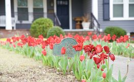 Tulips around a home's house number sign Stock Images