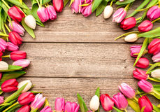 Tulips arranged on old wooden background Stock Images