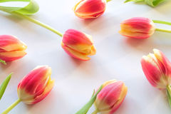 Tulips. Arranged on white background; upview Royalty Free Stock Images