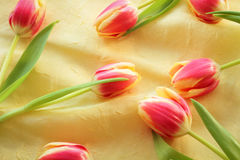 Tulips. Arranged on yellow background; upview Stock Image