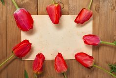 Tulips as a frame for old blank paper sheet with place for text, wooden boards on background - holiday and greeting concept Royalty Free Stock Image