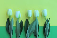 Tulips as a gift card. Tulips gift card white flowers spring green background yellow summwr summer celebration happiness cheerfu cheerful leafs still life stock image