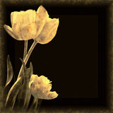 Tulips Background Stock Photography