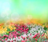 Tulips background Royalty Free Stock Photo