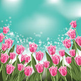 Tulips background with copy space. EPS 10 vector stock illustration