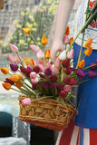 Tulips in bamboo basket Stock Photo