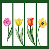 Tulips banners set Stock Images