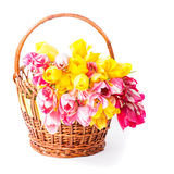 Tulips in basket Stock Images