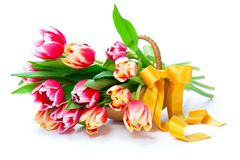 Tulips in a basket royalty free stock images