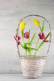 Tulips in basket royalty free stock photo