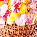 Tulips in basket Royalty Free Stock Photography