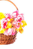 Tulips in basket Royalty Free Stock Image