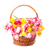 Tulips in basket Stock Photo