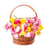 Tulips in basket Stock Photo