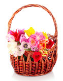 Tulips in basket isolated Royalty Free Stock Images