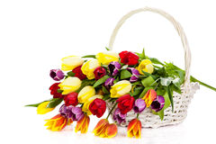 Tulips in basket isolated on white background. colors flowers Royalty Free Stock Photo