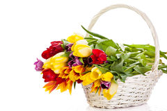 Tulips in basket isolated on white background. colors, spring flowers Royalty Free Stock Image