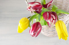 Tulips in basket Royalty Free Stock Images
