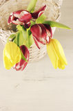 Tulips in basket Stock Image