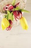 Tulips in basket stock image
