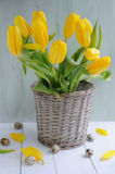 Tulips in basket, spring easter background Stock Photography