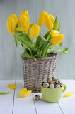 Tulips in basket, spring easter background Royalty Free Stock Images