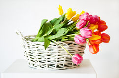 Tulips in the basket Royalty Free Stock Photos