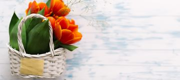 Tulips in a basket on a white wooden background Royalty Free Stock Image