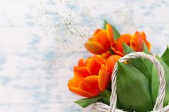 Tulips in a basket on a white wooden background royalty free stock photography