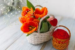 Tulips in a basket on a white wooden background stock image