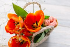 Tulips in a basket on a white wooden background royalty free stock photos