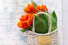 Tulips in a basket on a white wooden background stock photos