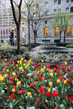 Tulips bed in downtown Stock Photos